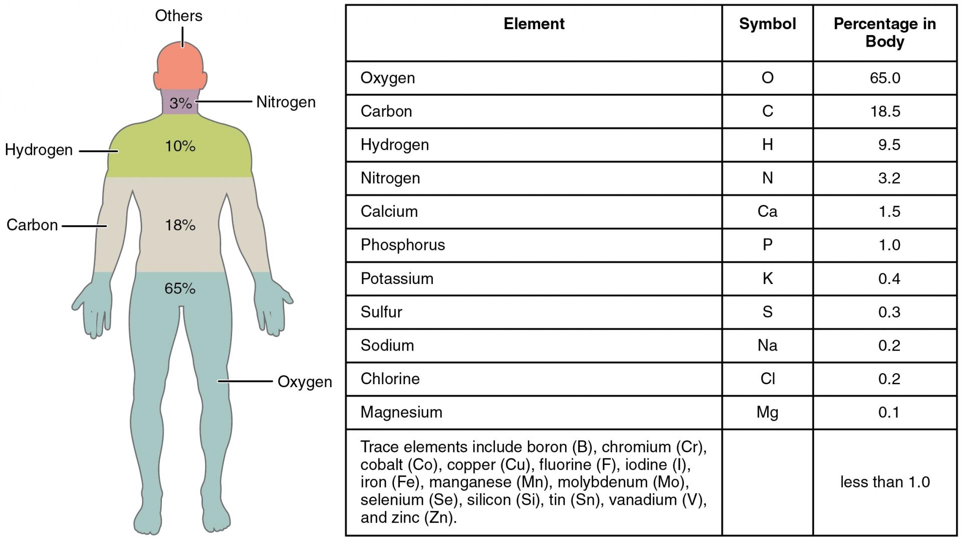 Elemente-des-menschlichen-Körpers.jpg